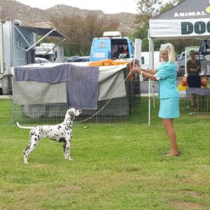 Conformation Training in Encinitas CA - Hot Dog on a Leash