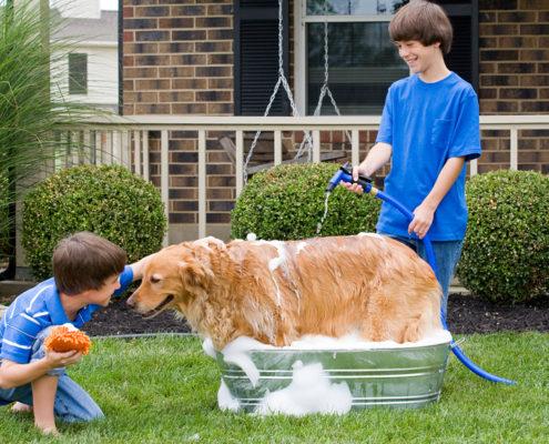 Are You Bathing your Dog Correctly?