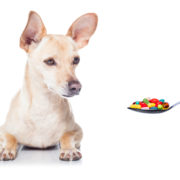 Over The Counter Medications That Are Safe For Dogs.