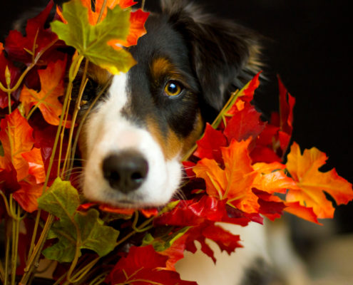 Thanksgiving Safety Tips For Pets