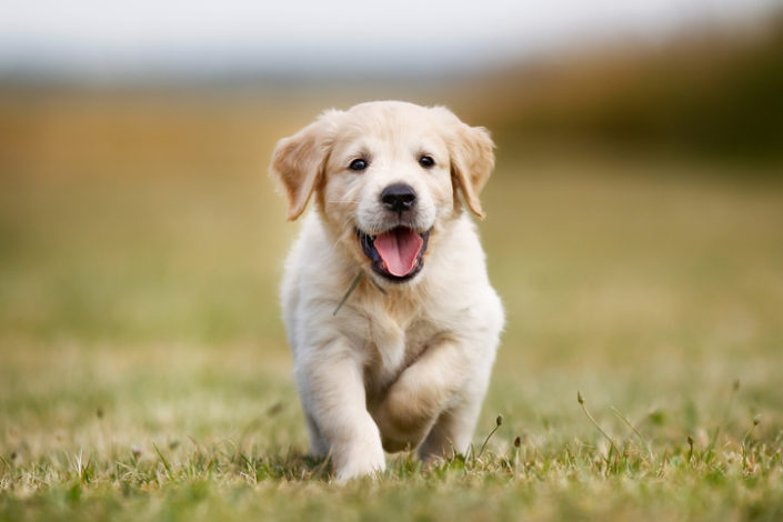 How Soon Can a Puppy Become a Runner?