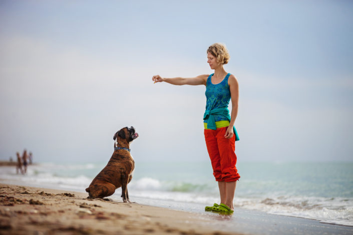 Dog Training. What works, And What Doesn't