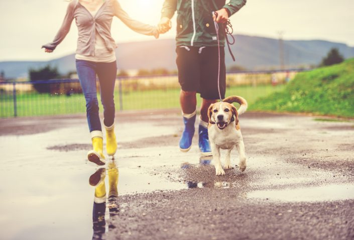 Why Walking Your Dog is Great Exercise