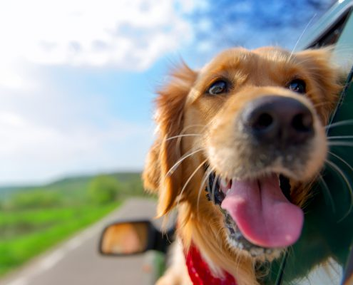 5 Easy Tips for Keeping Your Dog Safe in the Car