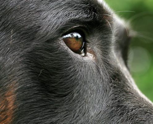Can Dogs Sense Spirits?