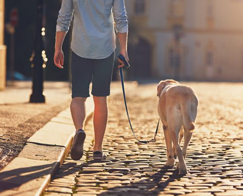 Leash Reactivity in Otherwise Friendly Dogs
