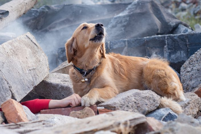 6 Incredible Things Dogs Can Sense Before They Happen