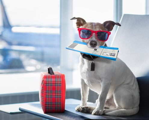 Too Hot to Fly Summer Airline Pet Embargoes