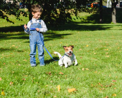 How to Teach a Puppy to Walk on a Leash