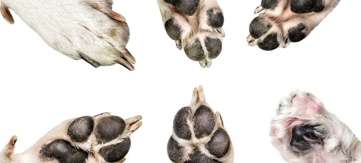 Summer Heat Can Be Tough On Your Dog's Paws