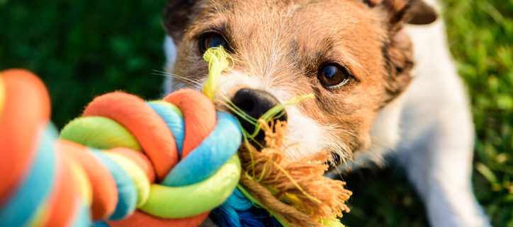 Are Rope Toys Safe for Dogs