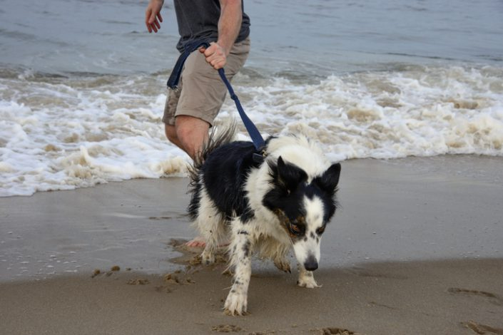 Pet Misbehaving It Might Be Your Fault