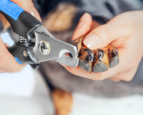 Take the Stress Out of Trimming Your Dog's Nails
