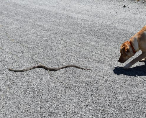 9 Tips To Keep Your Pup Safe From Snake Bites