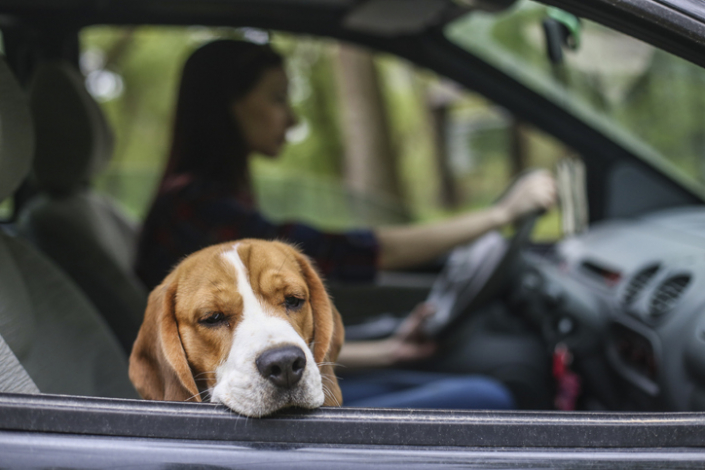 Help for Your Car Sick Dog
