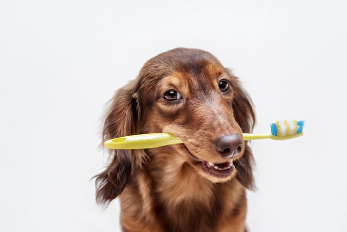 Doggie Dental Hygiene