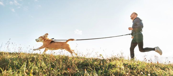 Taking Your Dog for a Run!