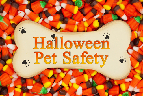 10 Halloween Safety Tips for Pets
