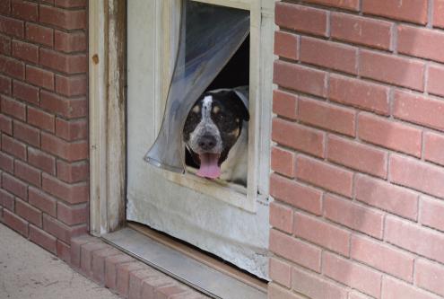 Doggie Doors