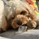 Dogs & Ice Cubes Good or Bad