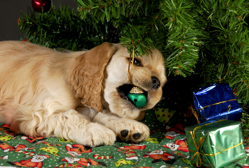 Christmas Trees & Dogs A Bad Combination!
