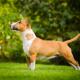 Spotlight Breed Bull Terrier