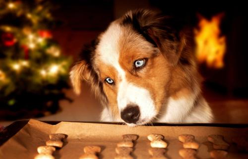 Tuesday's Treat Christmas Cookies
