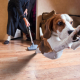 Vacuums & Dogs Oh My!