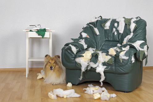 Damaged Furniture We Can Help!