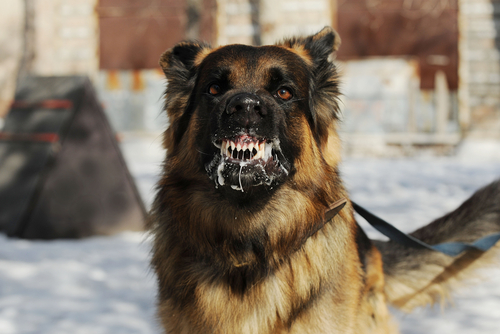 Does Your Dog Have Rabies