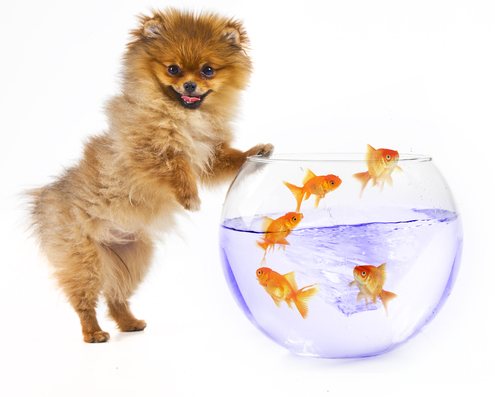 Keeping Fish Tanks Safe from Dogs