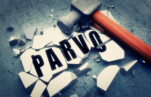 Parvo What You Should Know