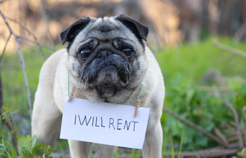 Pet-Friendly Rental Property Policies