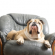 The Myths of Leather Furniture & Dogs
