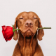Valentine's Day – Ways Dogs Show Love!