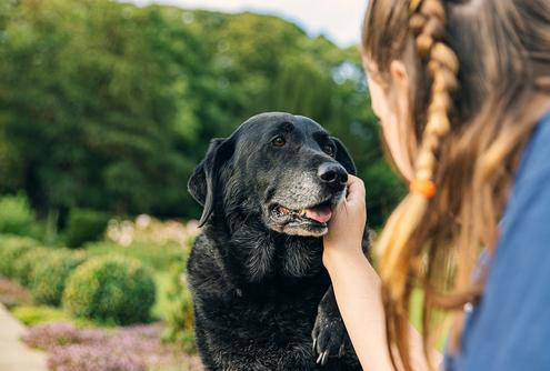 Extra Care for Your Senior Dog