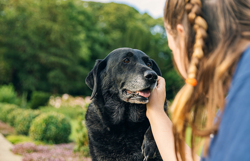Extra Care for Your Senior Dog