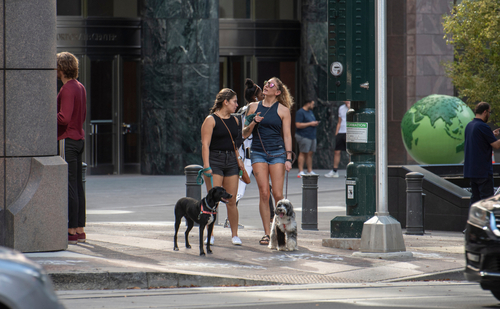 Pet-Friendly Cities in the United States