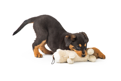 Teething Stages for Puppies