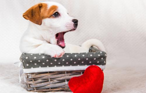 Why do Dog's Yawn