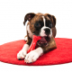 Dog Toy Dangers You Should Know About