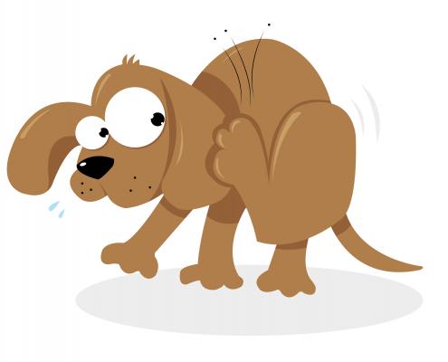 How Do I Know If My Dog Has Fleas