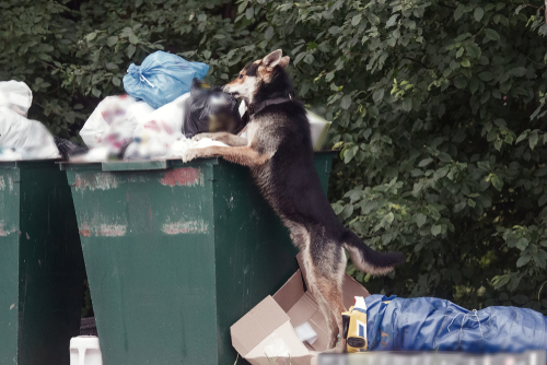 Keeping Your Dog Out of the Trash Can