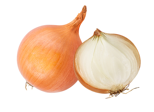 My Dog Ate Onions – What to Know!