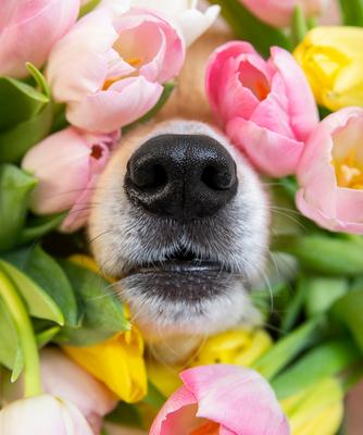 Dogs & Seasonal Allergies