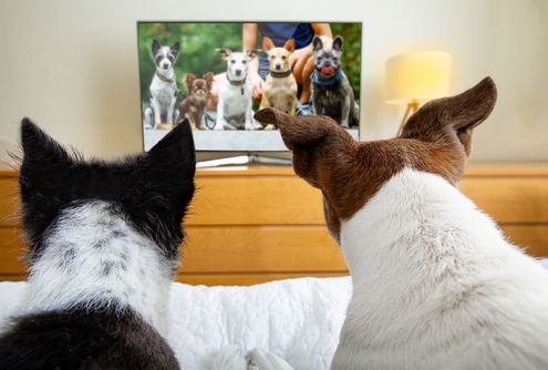 What Dogs See When They Watch TV