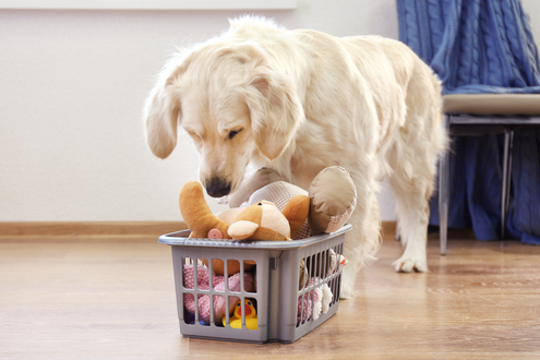 Brain Boosting Activities for Dogs