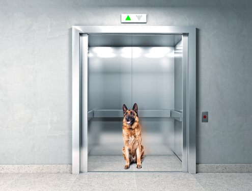 Navigating Elevators and Hallways with Your Dog