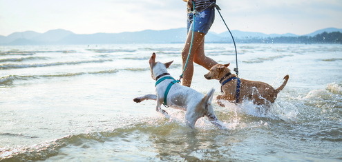 Safety Tips for Taking Your Dog to the Beach
