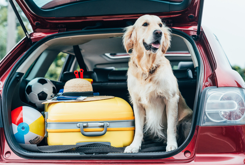 How to Make Your Dog the Perfect Travel Companion
